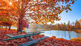 Recommended_autumn-leaves-beautiful-daylight-17416960