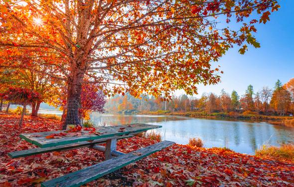 Top_week_autumn-leaves-beautiful-daylight-17416960