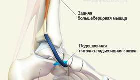 Recommended_anatomy-foot-1